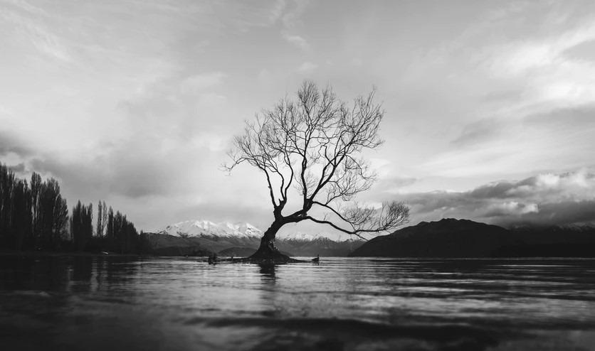 Erico Marcelino - The Wanaka Tree, New Zealand