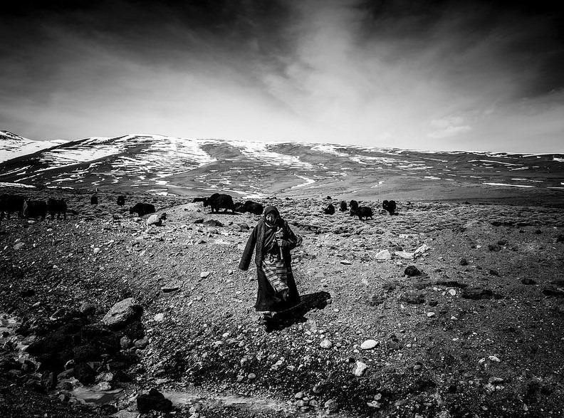 Sherrin Lim – The yak herde